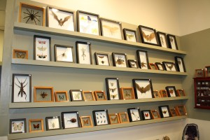 Gallery wall of framed bugs