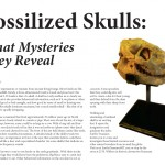 Fossilized Skulls